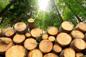 """暴跌超50%!美国木材价格""""腰斩"""",但购房者仍然没有看到希望……"""